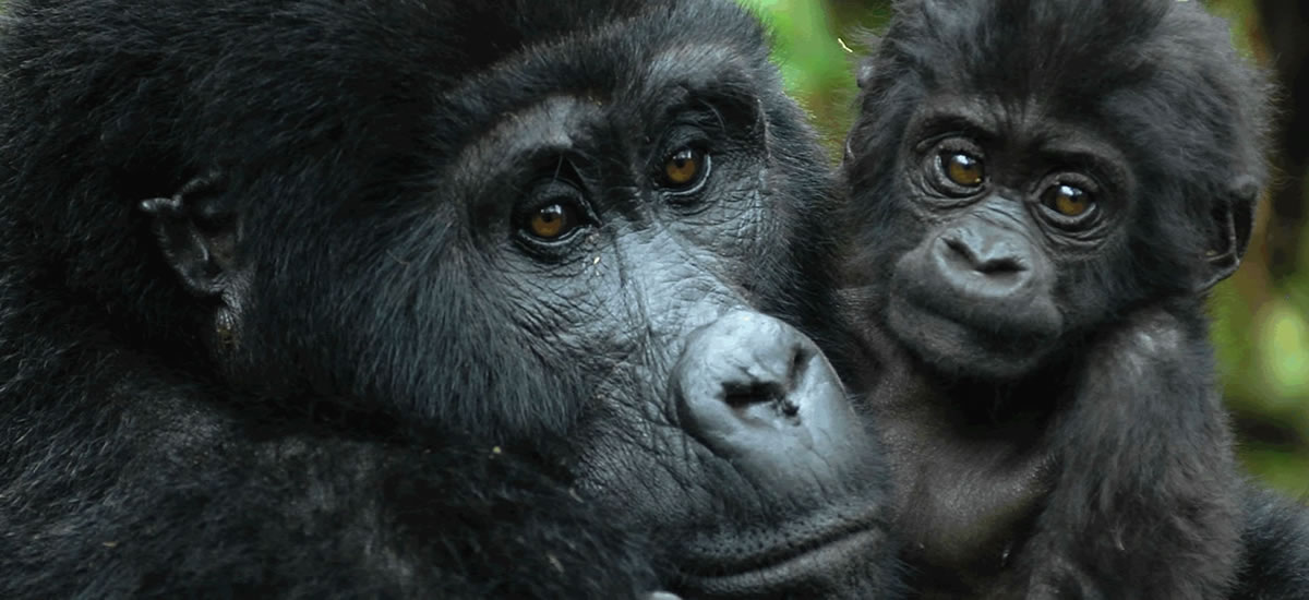 Primate and Wildlife Safari